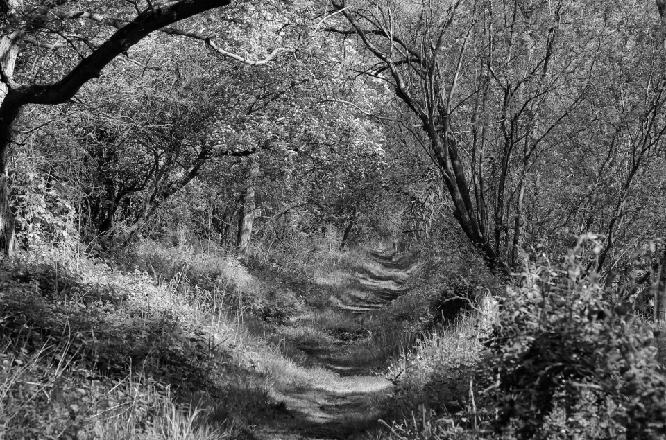 Leica 75mm Summicron Asph